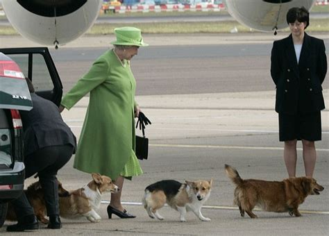 queen corgis queen elizabeth ii grimaces as she attends church daily