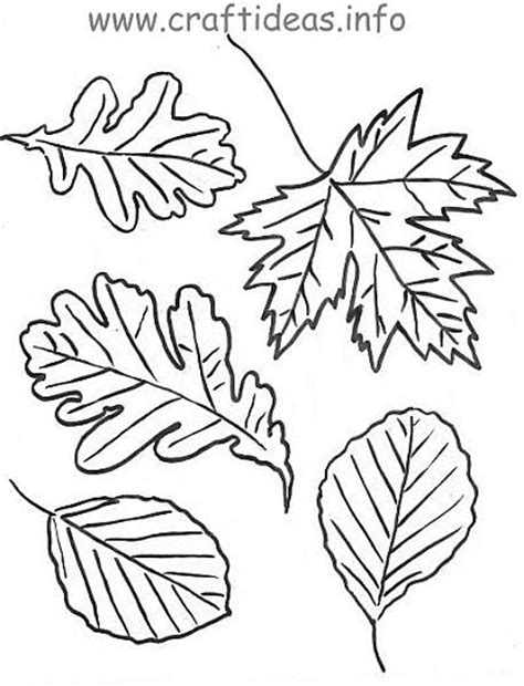 leaf coloring pages for preschool autumn leaves craft coloring page template re pinned by