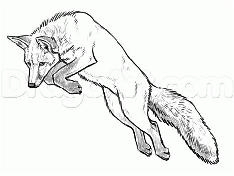 realistic fox coloring page 55 mammals realistic red fox coloring pages fox