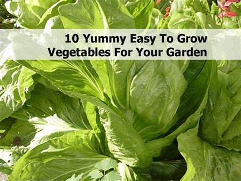 vegetables easy to grow 10 easy to grow vegetables for your garden