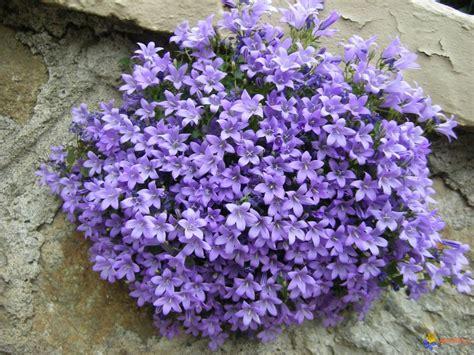 Flower Salad 3l canula