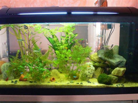 aquarium 100 l mon aquarium 100 litres et mon 20 litres