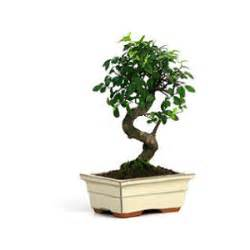 Beautiful Decor Ideas For Home Indoor Plants Bonsai Trees Tropical House Plants