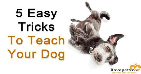 5 Easy Tricks To Teach Your Dog   I Love Pets