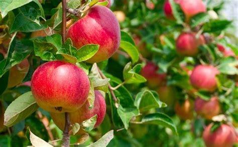 Pembersih Buah Dan Sayur Dari Bahaya Pestisida 10 jenis buah dan sayur yang paling tercemar pestisida