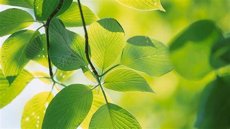 leaf wallpaper hd   pixelstalknet