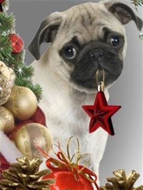 merry pug pets mostly pugs bulldogs on 868 pins
