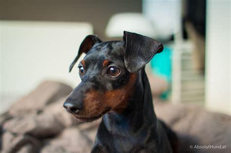 Slank Brown aus meinem hundealbum absoluthund at