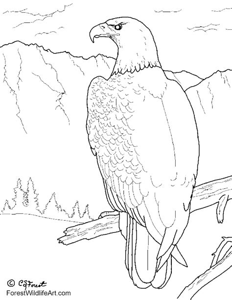 coloring book eagle forest wildlife bald eagle coloring book page