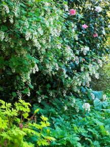 shrubs for shade casual cottage