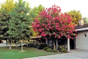 what of trees are in your yard room decorating
