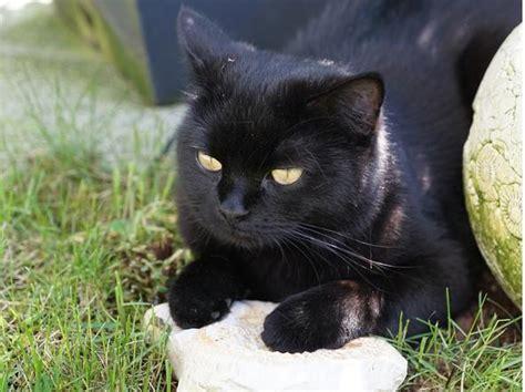 malattie portate dai gatti superstizioni e gesti scaramantici come sono nati e