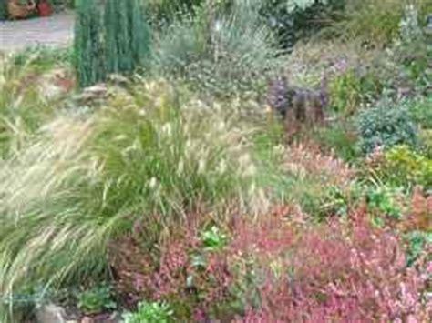 winterharte gräser garten winterharte gr 228 ser garten ziergras winterhart garten gras