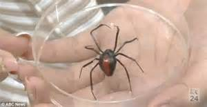 giant spider in bathroom japan invaded by redback spiders and it s all down to