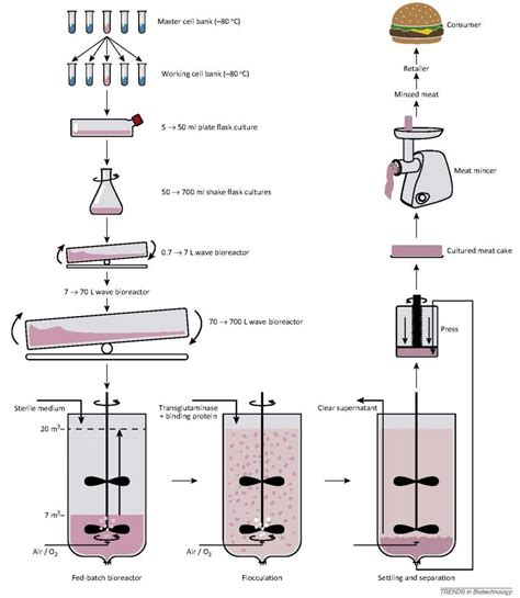 bioreactor cell culture protocol stem cells as a future source for eco friendly