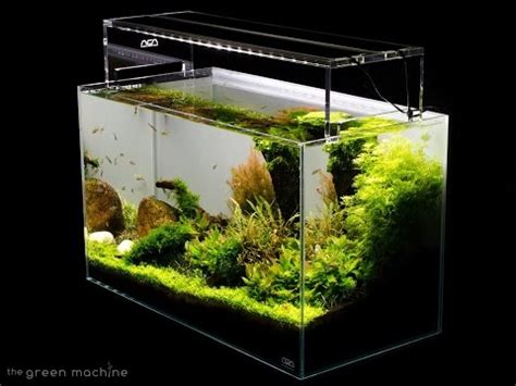 tutorial aquascape huge aquascape tutorial step by step spontaneity by ja doovi
