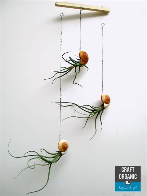 Nautilus Themed Tillandsia Mobiles   Craft Organic