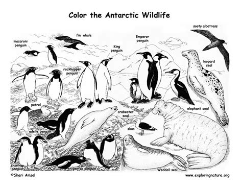 antarctica coloring worksheet coloring pages