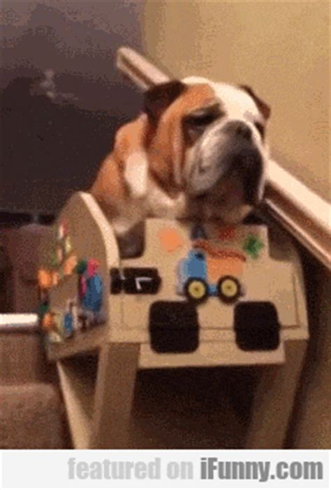 puppy his own elderly has his own stair lift ifunny
