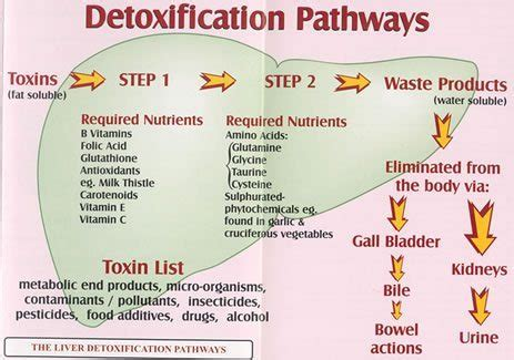 Detoxing Your From Drugs And by At Home Detox Rehab Guide