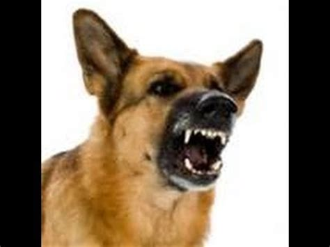 dogs barking sounds angry bark and growl sound effects
