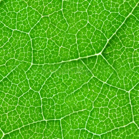 pattern bush in leaf green green leaf seamless texture stock photo image of texture