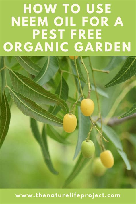 Pest Neem by How To Use Neem In Your Organic Garden For Pests