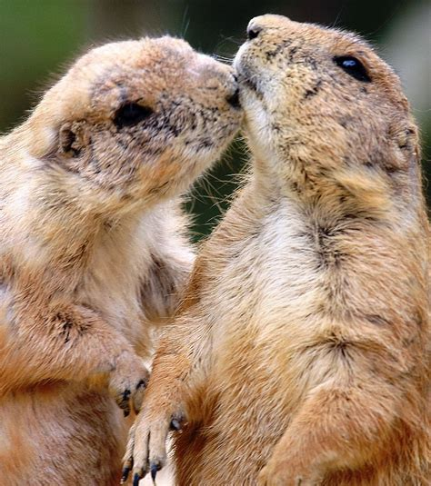 most adorable animals the 30 most adorable animal kisses ever seen the wondrous
