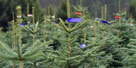 Seit Wann Gibt Es Den Adventskranz by Seit Wann Gibt Es Weihnachtsbaume Europ 228 Ische