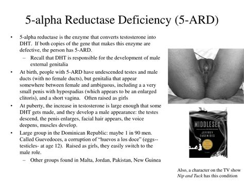 foods that block the 5 alpha reductase enzyme ppt genetics of human sexual development powerpoint