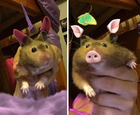 people   snapchat filters   animals