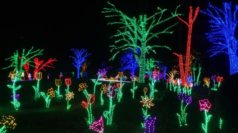 walk through christmas lights winter walk of lights holiday beauty at meadowlark
