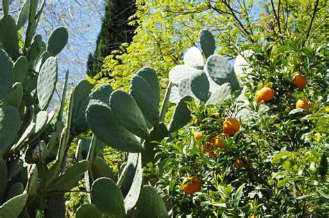 giardini siciliani andar per giardini la sicilia nord orientale da messina
