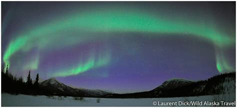 Northern Lights Tours by Alaska Travel Alaska Northern Lights Tour