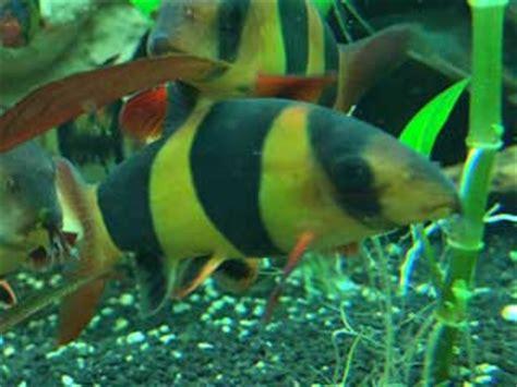 aquarium fische 220 bersicht 252 ber die wichtigsten arten