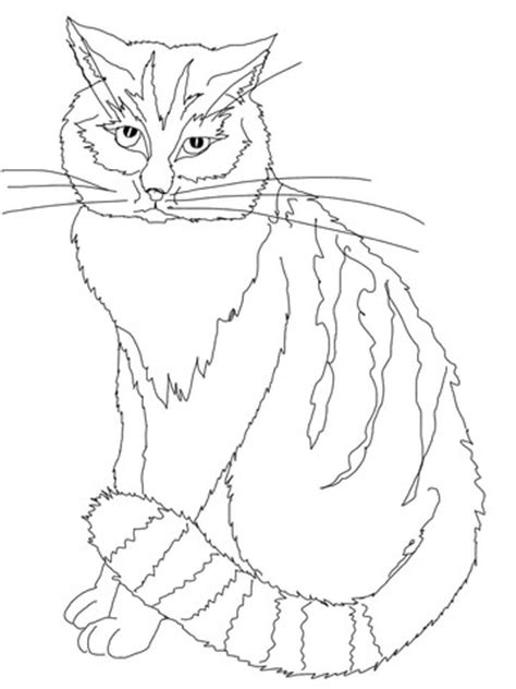 chinese cat coloring page chinese mountain cat coloring page super coloring