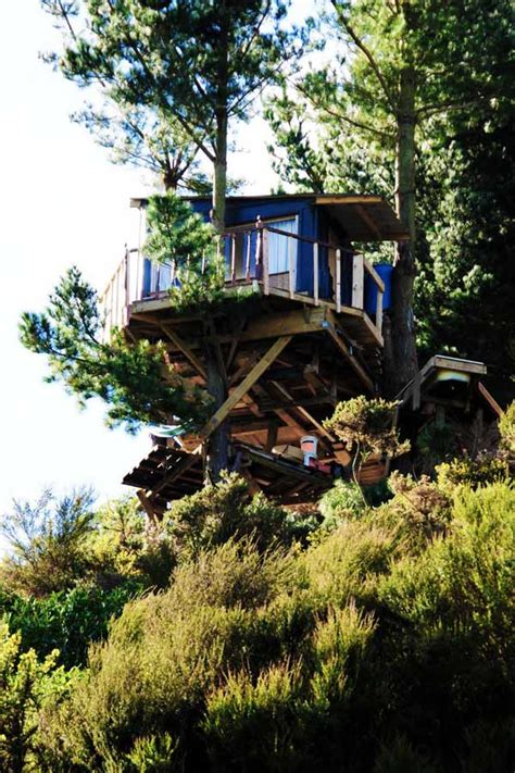 tree in house design green tree house built on a budget modern house designs