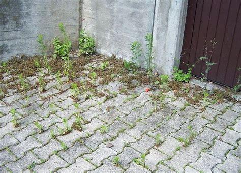 Unkraut Zwischen Steinen Vernichten 1007 by Erfolgreich Im Kf Gegen Das Unkraut Im Garten Tipps