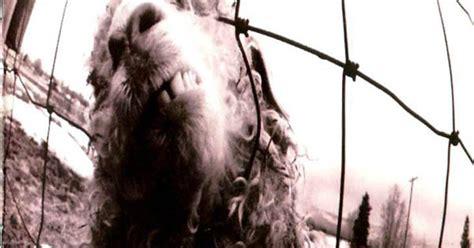best stoner rap reviewed pearl jam s early classics reissued wiz khalifa