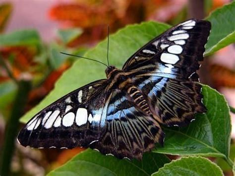 Search For In The World Most Beautiful Butterflies In The World Search Beautiful Butterflies