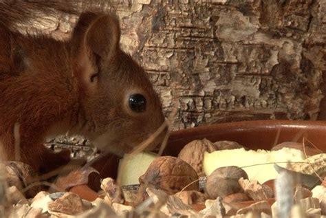 dieren begraven in je tuin vroege vogels tipvideo eekhoorn in de tuin vogels en
