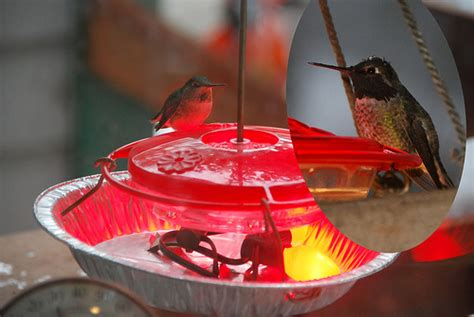 keeping hummingbird nectar from freezing