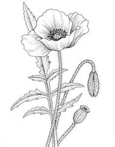 21  Poppy Coloring Pages Free Printable Word PDF PNG JPEG EPS sketch template