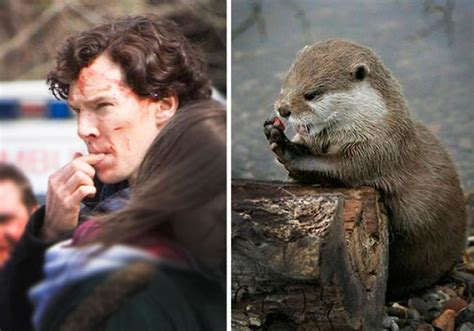 Benedict Cumberbatch Otter Meme - benedict cumberbatch looks like an otter bored panda