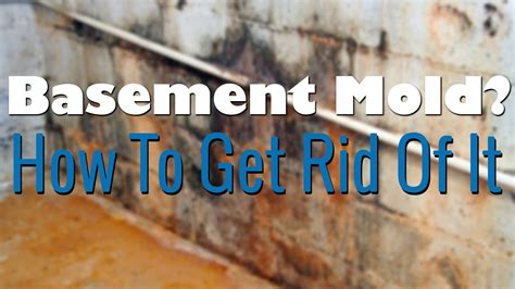 basement mold removal how to remove mold