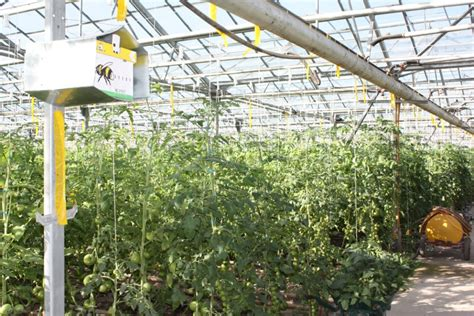 Rural Development Usda by Bumblebee Pollination Now In Greenhouse Vegetable Crops In