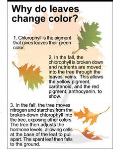 why do the leaves change color in the fall yksd physical science chapter 6 introduction quot how matter