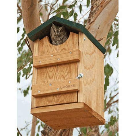 owl bird house plans owl bird house plans crazy birds pinterest