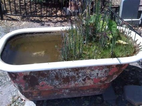 bathtub fish pond the gardens of italy