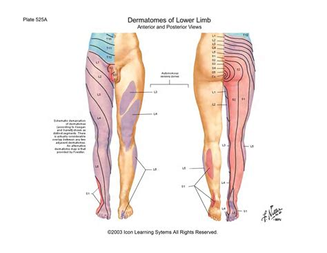 The Leg L by Scientia Joints Of The Lower Limb
